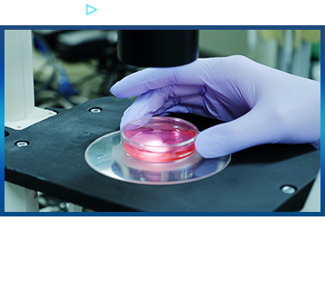 No.01 Regenerative medicine transforms medical treatment Autologous Cultured Cartilage